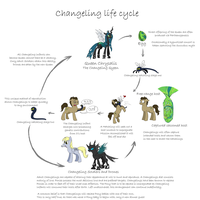 MLP - Changeling Life Cycle by caycowa
