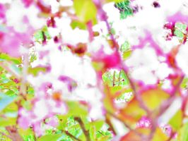 Blossom Refraction by BloodoftheTitan1