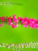 .:Ultra Bright Pinks:. by Eclipsed05