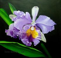 Purple Orchid by TonyMartyn