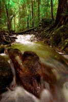 Mossman Gorge cascades by B-LightPhotography