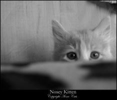 Nosey Kitten by Aoxa-Cats