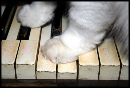 The Kitten and the Keys by some-emo-kid