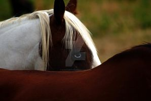 Horse with Blue Eye by houstonryan
