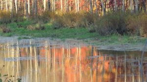 Autumn Reflection 3 by Leannnorrisbond