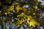 2014-10-22 Colors of the Day 12 by skydancer-stock