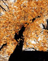 upward perspective on fall by amour-etranger