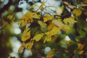 autumn beauty 3 by poisonesss
