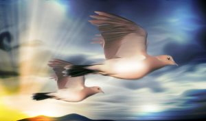 Two Tutle Doves by hallbe