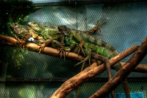 Cameleon by CatchMePictures