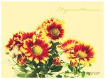 Postcard with Chrysanthemums by Eachra