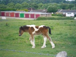Brown and white foal by M-Bphotography