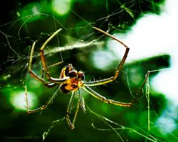 Unidentified Spider 1 by stormymay888
