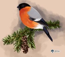 Bullfinch by krikra