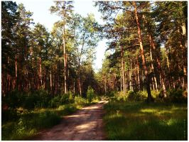 Forest by Holi--Day