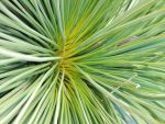 grass tree by kalascee