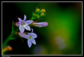 A Touch Of Purple by CecilyAndreuArtwork