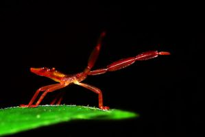 Insects 49 by josgoh