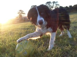 Sunset Soccer Dog by FerrerTriple0