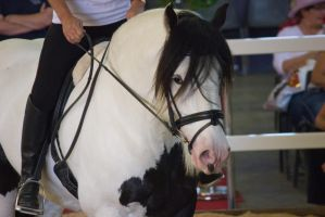 STOCK - 2014 Total Equine Expo-66 by fillyrox
