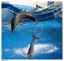 Dolphins Jumping by Della-Stock
