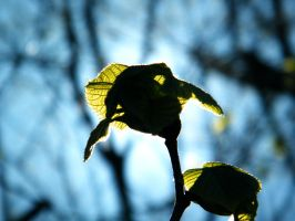 New Green Leaves by iluvobiwan91