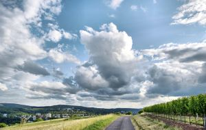 Field View Petrisberg by m3tzgore