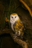 Did I Mention I Love Owls? by greenwalled1