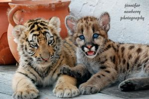 Tiger Cub and Geronimo 1 by filemanager