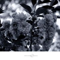 The Softness of Your Breathing by WhiteBook