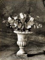 Tulips in urn - Still Life by davepphotographer