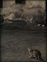 All cats are grey by daaram