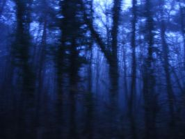 Misty Forest by Leatherfeet