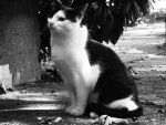 A Cat Titling Its Head by Photography-Dreamed