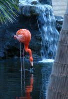 Red Flamingo by PhotographyRules