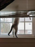 Bear Kitty plots her escape by starlitter