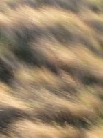 Blonde Grass by FiLH