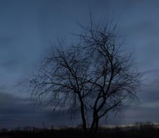 A Tree at Dusk by wetdryvac
