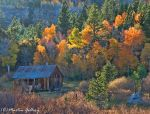 Fall Color 141010-69-Edit by MartinGollery
