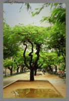 Tree in the avenue by ShlomitMessica