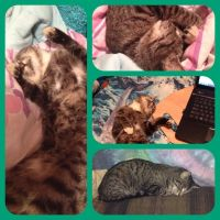 Bubert's Relaxation Poses! by Wootzie14
