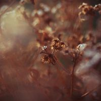 closer by ThisFairyTale