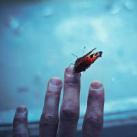 butterfly on my finger by all17