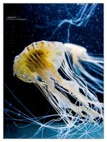 Jellyfish IV by bupo