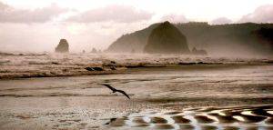 Haystack Rock and Seagull by skipsmagee