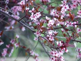 Blossom by TaliNatPhotography