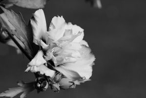Fleur04 black and white version by Noctalyss
