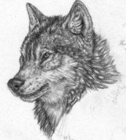 Wolf Head - pencil by Starcanis