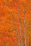 Fall Color by lechnirphotography