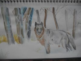 watercolor winter wolf by Armadeo